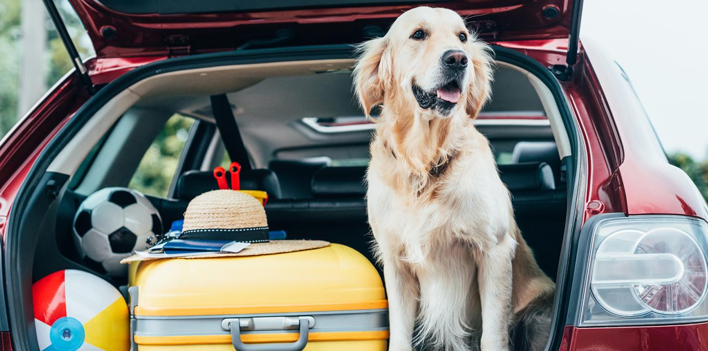 O czym pamiętać przed wyjazdem autem na urlop?